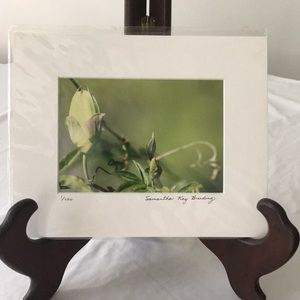 Passion Vine Photograph Signed & Numbered